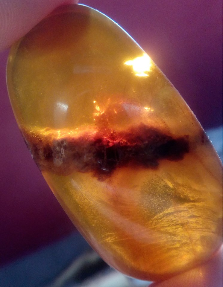 DNA in amber